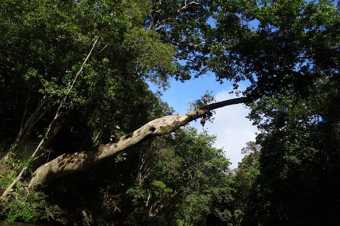 Day Tour Rainforest Taman Negara Canopy Walkway, Jungle Trekking, Aborigines