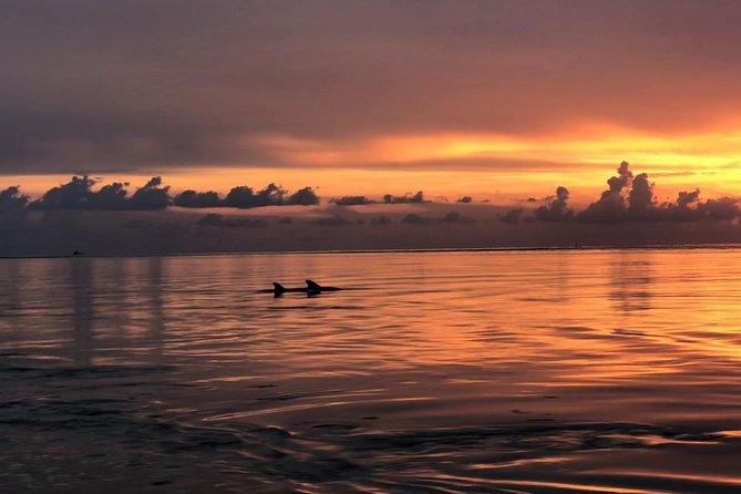 10,000 Islands Sunset & Shelling Kayak Adventure Tour: Naples Kayak Adventures