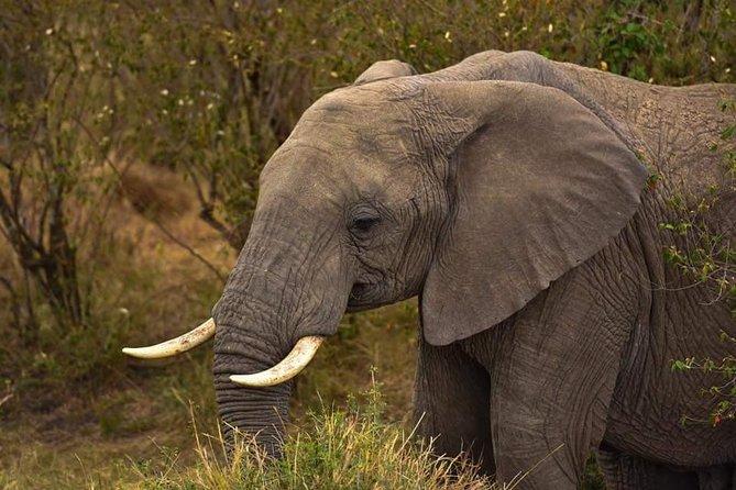 Tsavo East & West Amboseli Adventure Safari 7 Days.