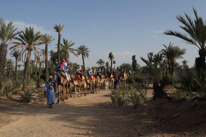 Camel Ride in the Palm Grove