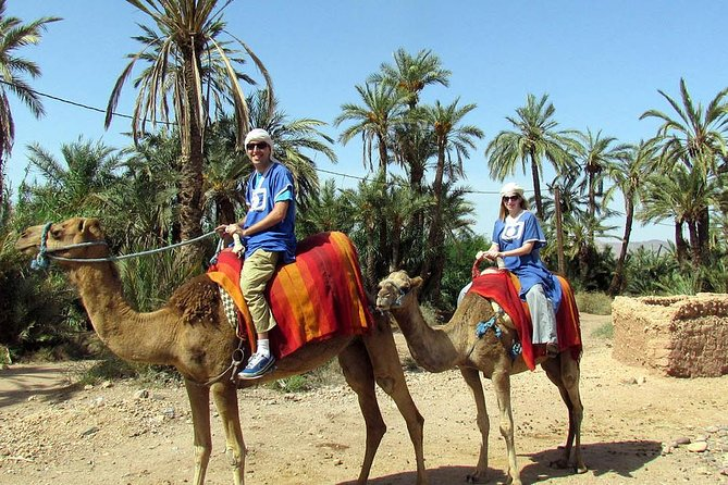 Dromedary ride in La Palmeraie
