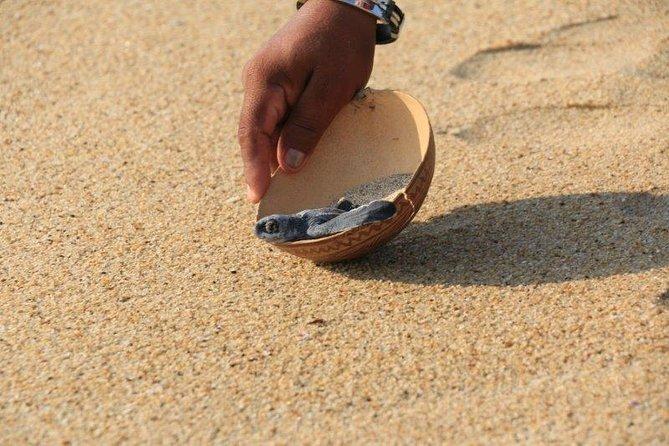 Turtle Release Escobilla Sanctuary