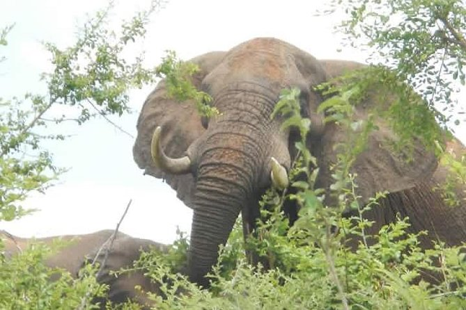 Full Day Chobe Safaris Trip