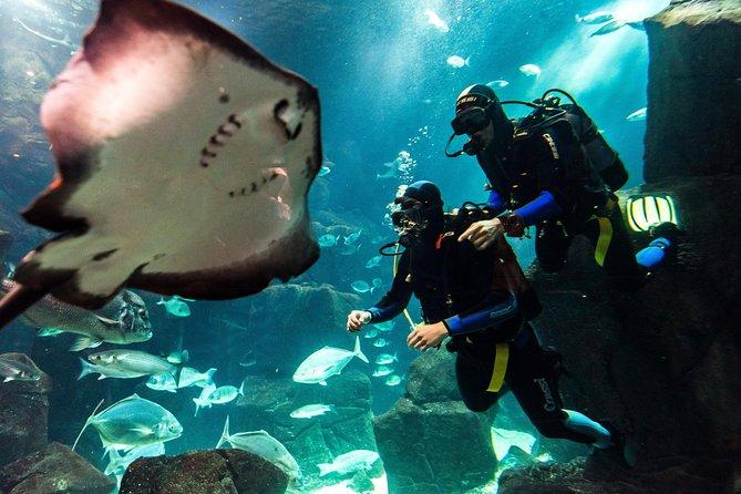 Mergulho no Aquário da Madeira