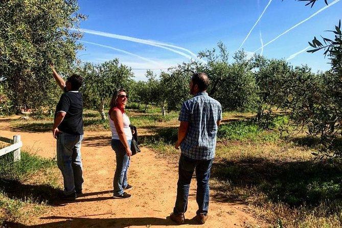 Tour di un'azienda produttrice di olio d'oliva da Siviglia