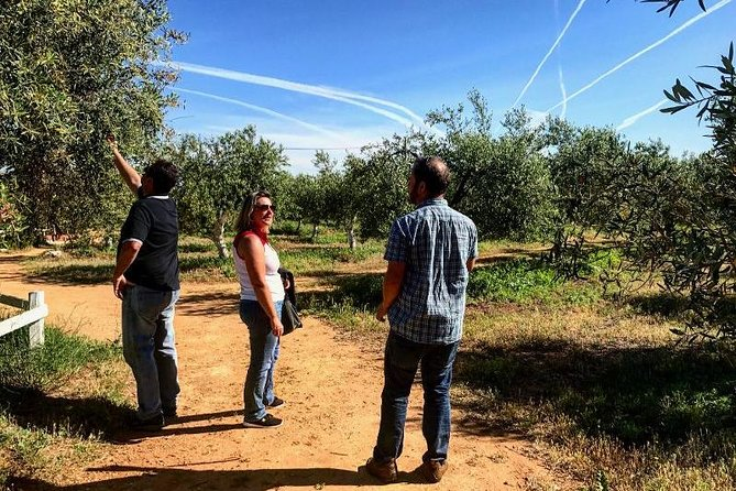 Olive Oil Farm Tour from Seville