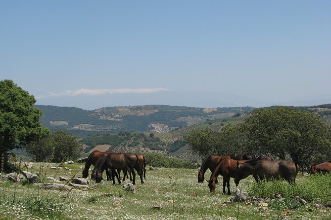 hiking trail in pasture with stud in freedom