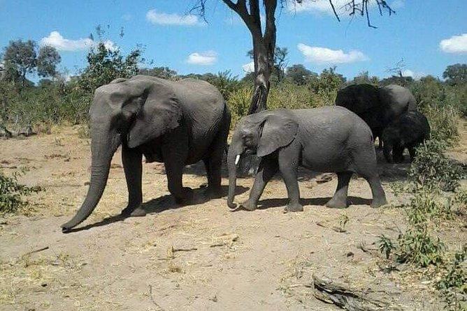 Full day Chobe safari