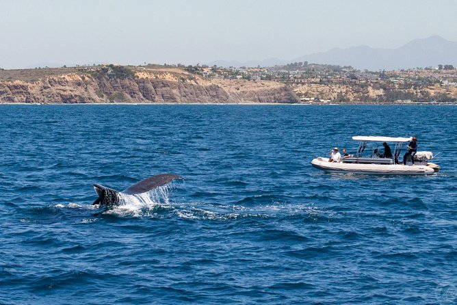 High Speed Zodiac Whale Watching Safari from Dana Point photo 3