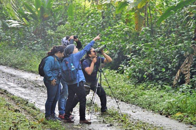 Tours Reserva biológica Buenaventura (Jocotoco)