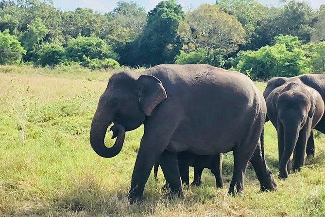 Safari Tour at Minneriya National Park