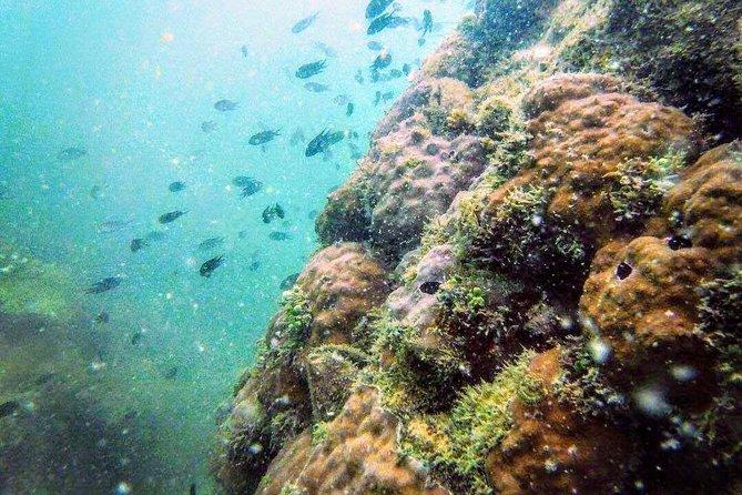 Koh Rong Samloem Snorkelling Adventure
