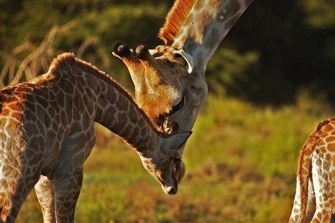 Kragga Kamma Private Game Reserve Half Day Safari