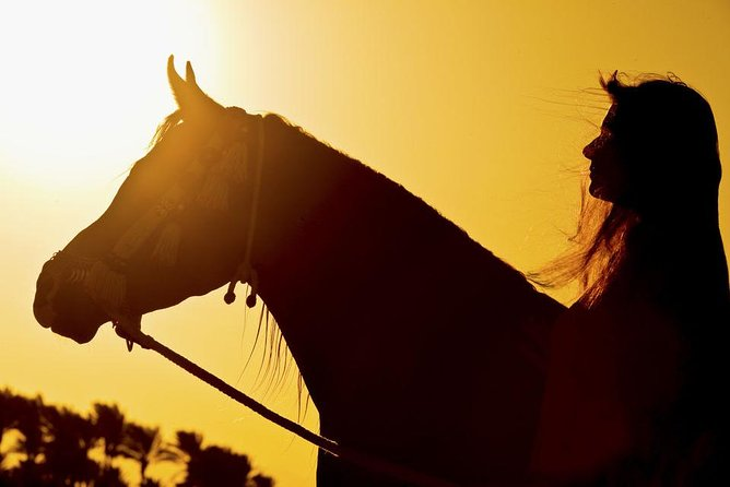 Local Horse Ride Experience Hurghada