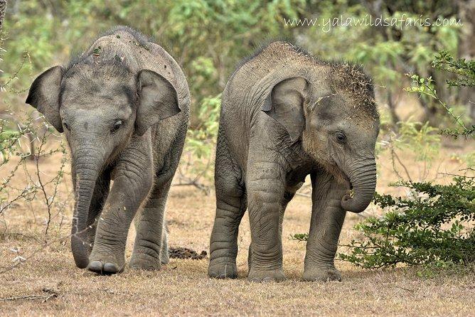 Private Half Day Tour :- Udawalawe National Park & Elephant Transit Home