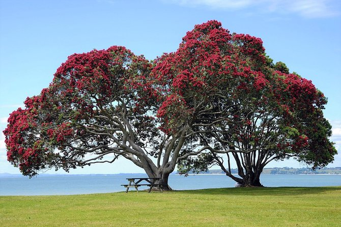1 Great Day Auckland - City & Spectacular West Coast Nature - Private Tour