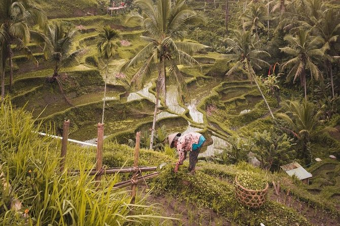 All of Ubud: Monkey Forest, Volcano, Temples and Rice Terrace