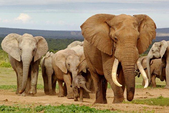 Maputo Special Reserve (Elephant Reserve)