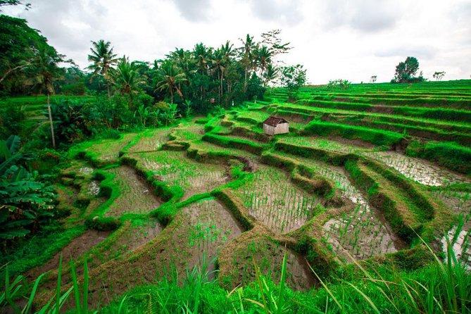 Ubud Tropical Rice Padi Terraces E-Bike Tour Half-Day WATERFALL ADVENTURE