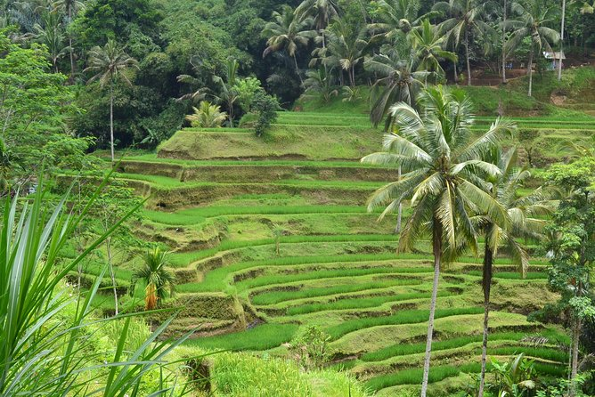 Full-Day Private Shore Excursion in Bali with Port Transfers