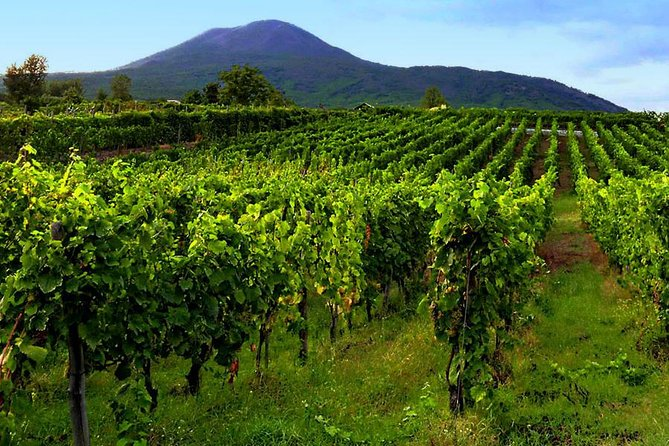 Tour of Sorrento Exploration+Wine Tasting with Lunch on Mt. Vesuvius (Full Day)