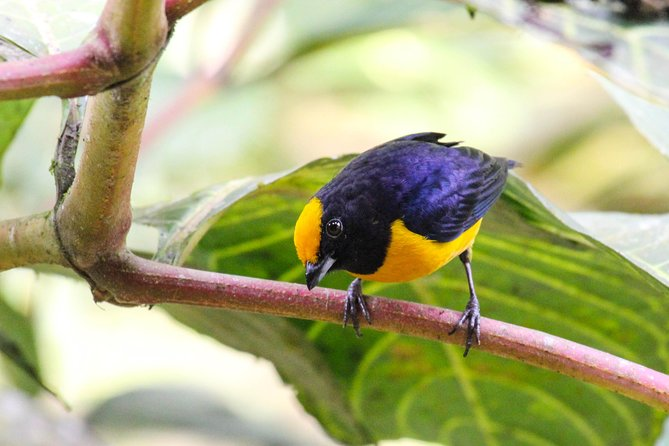 Birdwatching Tour in Tamarindo Tropical Forest area from Cuenca photo 8