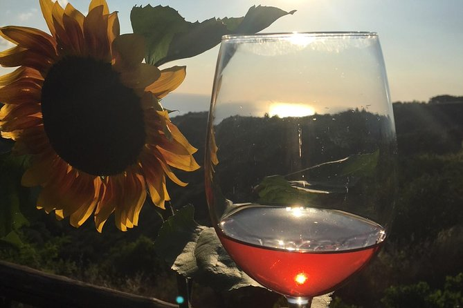Wine and Food Tasting in the vineyard