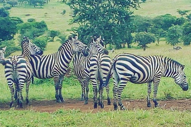 Akagera National Park Day Trip photo 3
