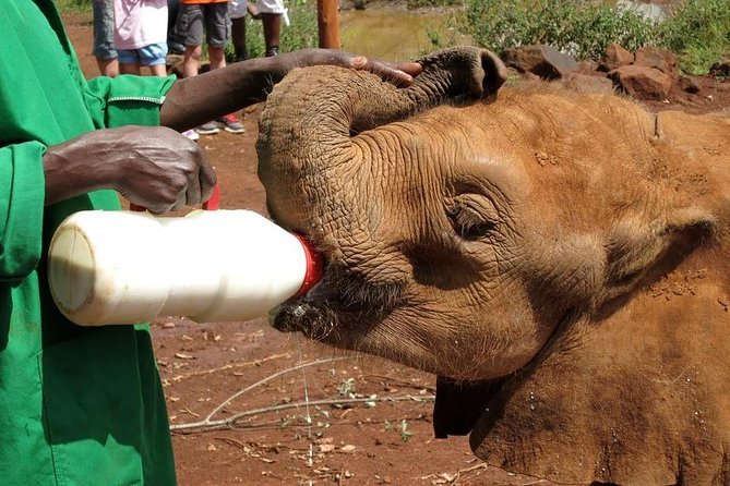 Nairobi National Park Elephant Orphanage Giraffe Center and souvenir shopping
