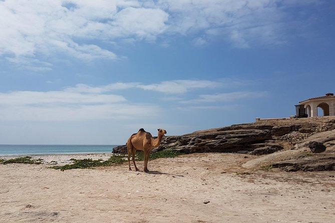 West Salalah Tour - Half Day - Private - By Beautiful Salalah