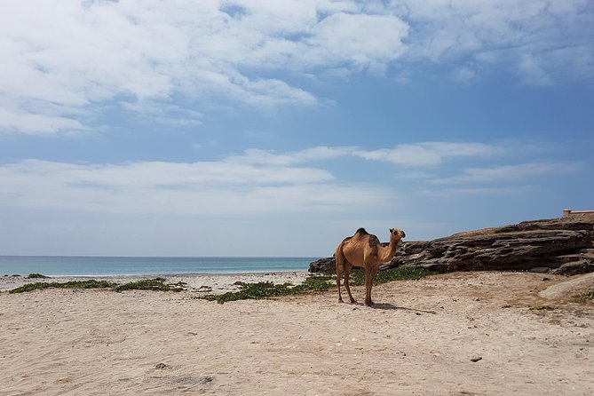 West Salalah Beach Excursion (Swim at Fazayah Beach) Half Day Private Tour