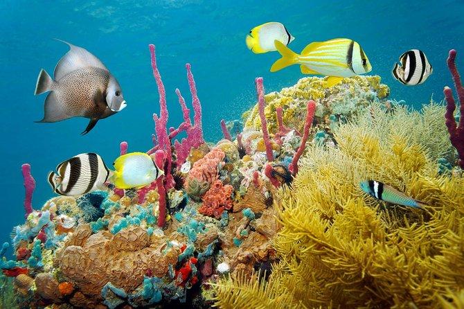 Mobay Snorkeling Tour