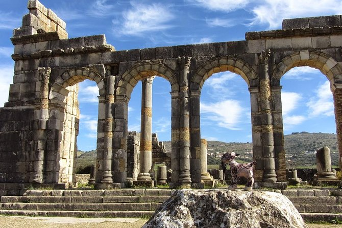 fes to volubilis and meknes day trip