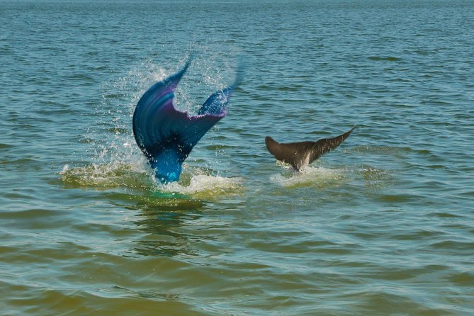 Mermaid Ocean Education Boat Tour