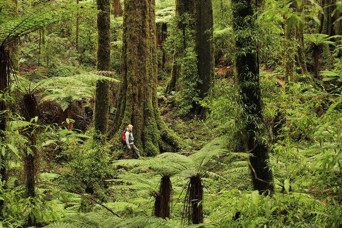 Hike New Zealand's finest forest - Whirinaki forest