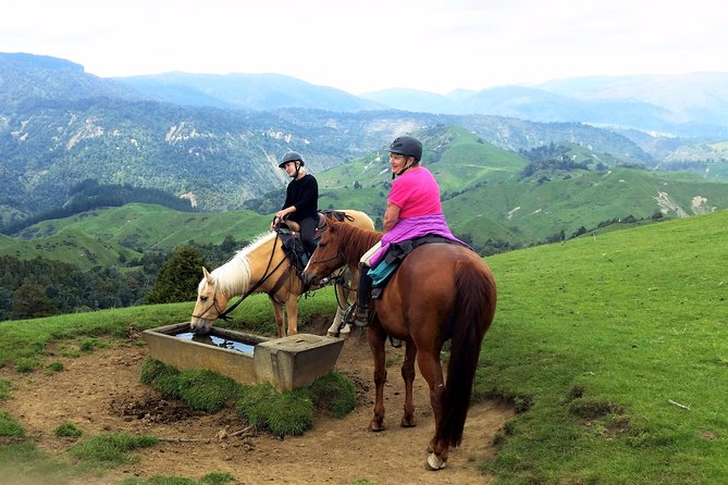 River Valley Stables - Harmony With Horses, Half Day Horsemanship & Trek