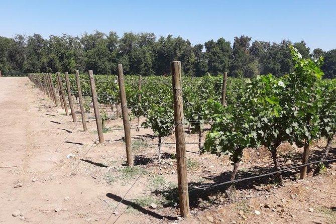 private half day wine tour , concha y toro from Santiago