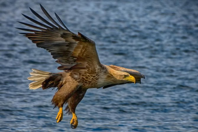 White-Tail Eagle Safari by Zodiac RIB boat from Bergen