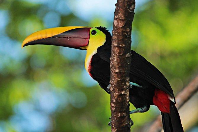 Bird-watching Tour - Manuel Antonio (minimum 2 people)