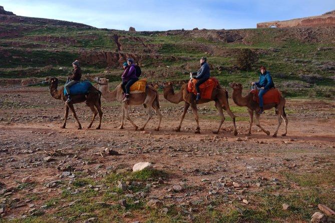 Day trip to Atlas Mountain & camel ride