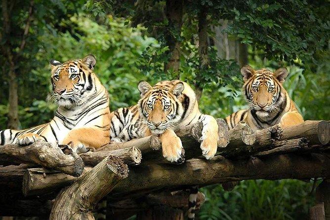 Chiang Mai Night Safari Tour including Round-Trip Transfer