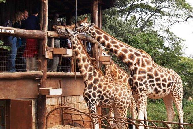 Karen Blixen Museum & Giraffe Centre Half day tour