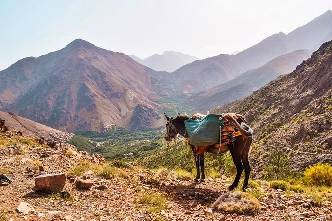 Day Trip and cooking with local family in the High Atlas Mountains photo 8