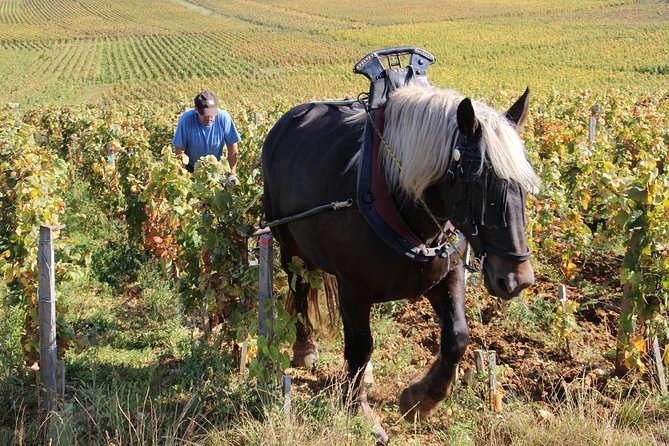 Organic, biodynamic and natural wine tours in Burgundy (Chablis & Beaune)
