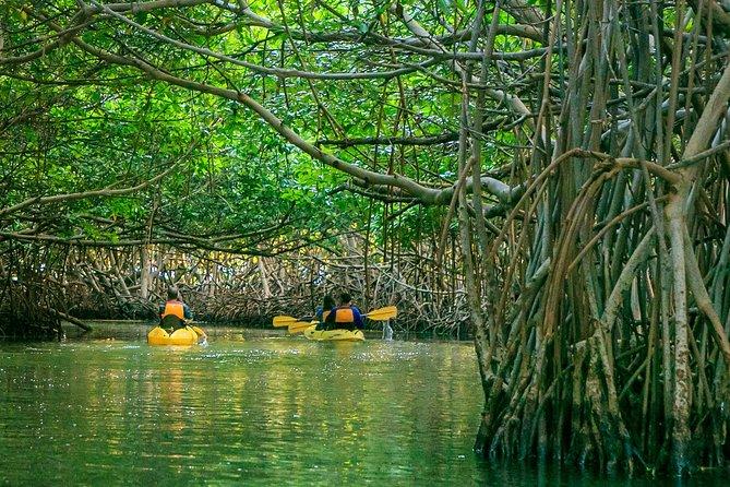 Bio Bay Night Kayaking 8:00pm | Laguna Grande, Fajardo