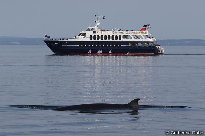 Rivière-du-Loup Whale Watching Cruise