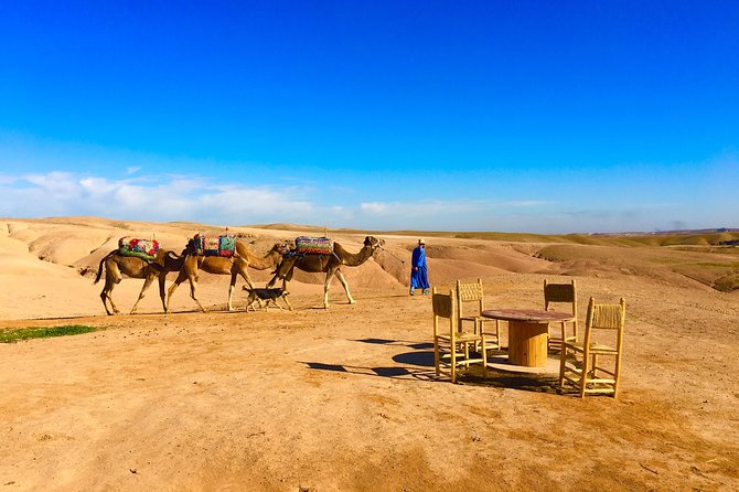 Majorelle Gardens,desert camel riding , lunch in a tent and Atlas private tour
