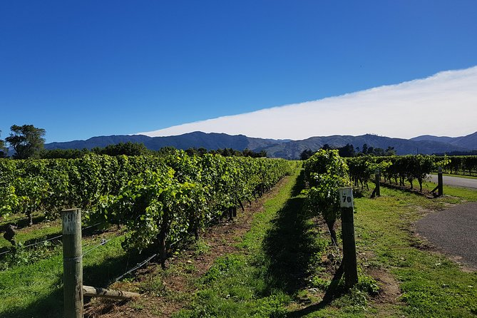 Half-Day Wine Tour in Marlborough with Wine Tasting