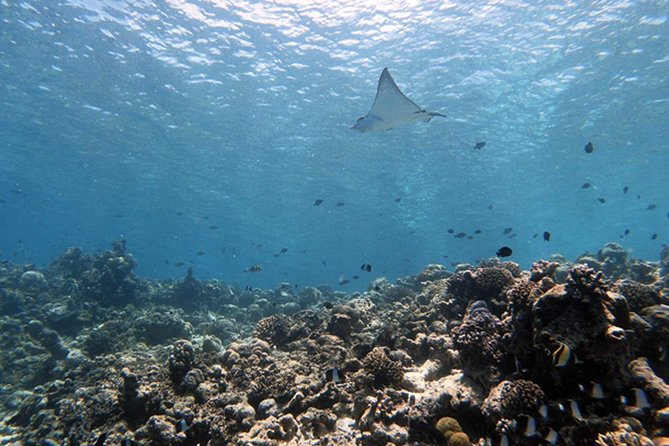 Discover Diving Tour in the Maldives (7 days)