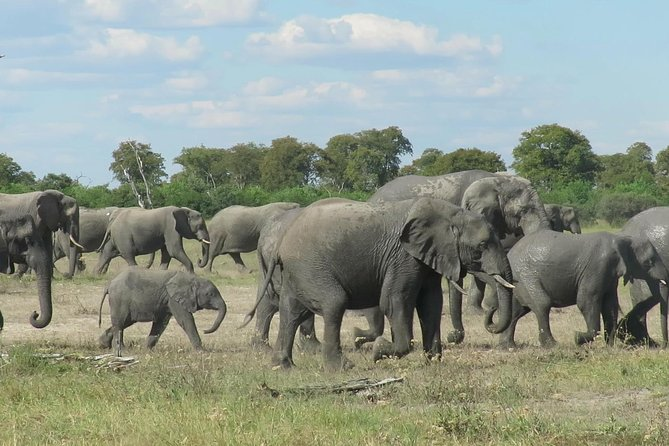 7 Days Big Five Safari Experience